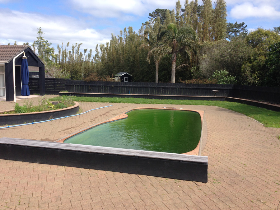 green pool water-green pool recovery-Swimmingly Pools